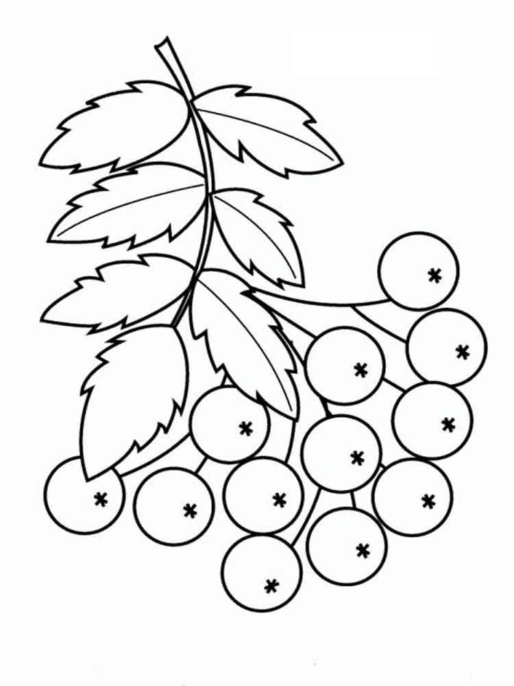 raskraski-jagoda-rjabina-9
