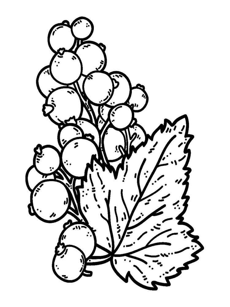 raskraski-jagoda-smorodina-1