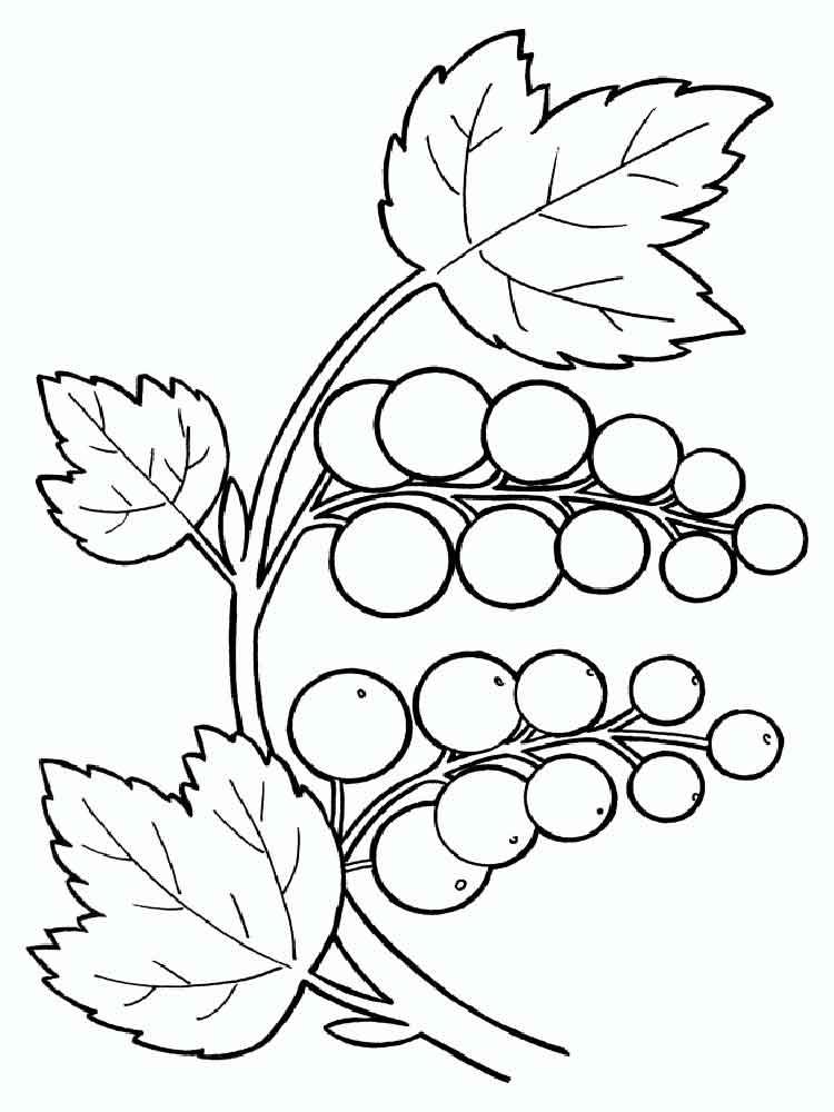 raskraski-jagoda-smorodina-2