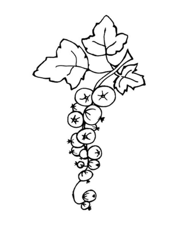 raskraski-jagoda-smorodina-4