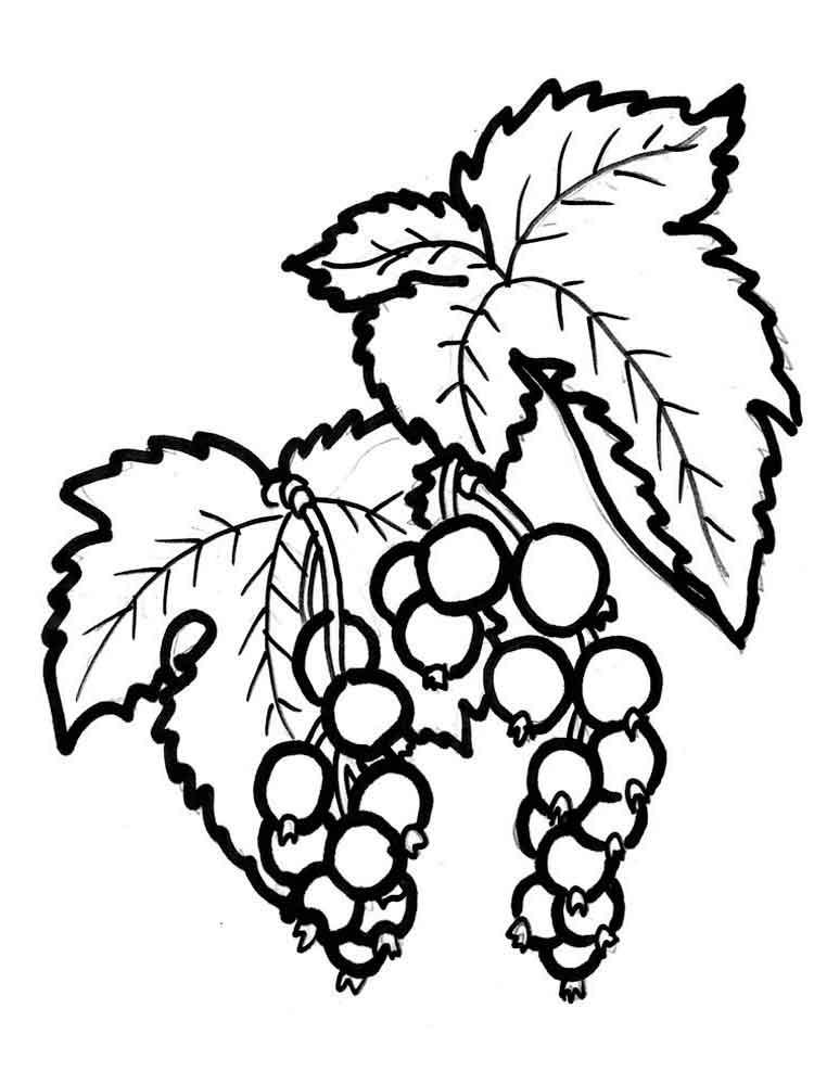 raskraski-jagoda-smorodina-5