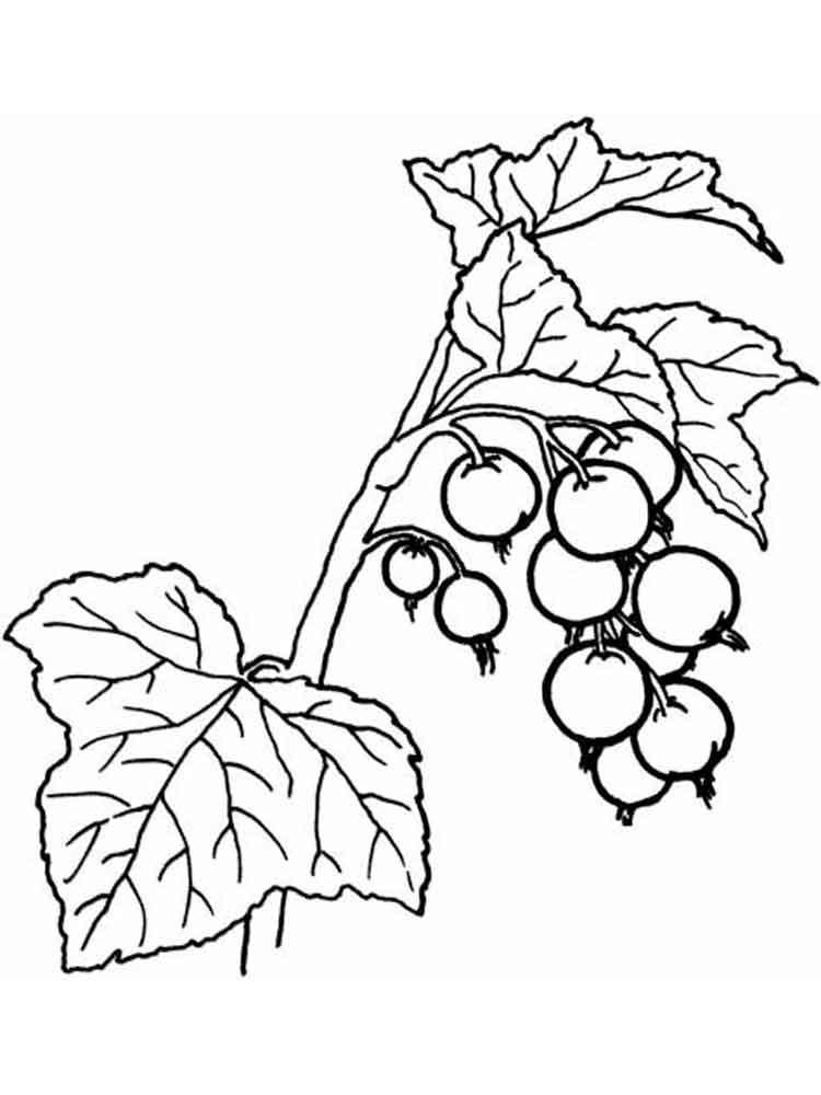raskraski-jagoda-smorodina-6