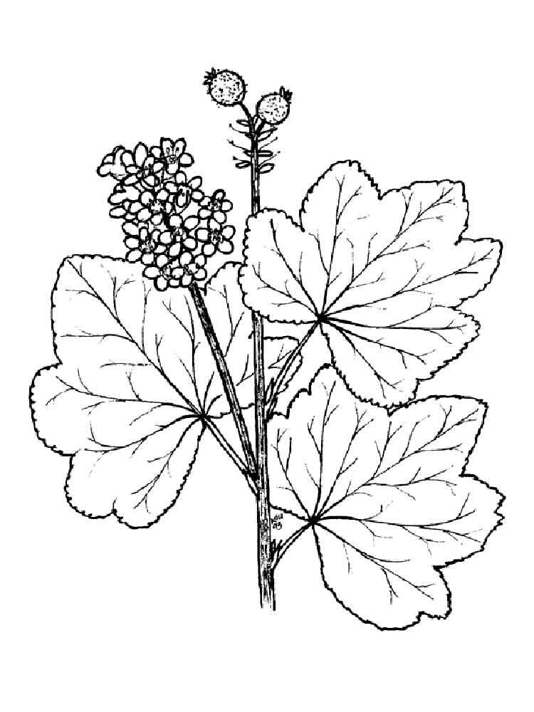 raskraski-jagoda-smorodina-7