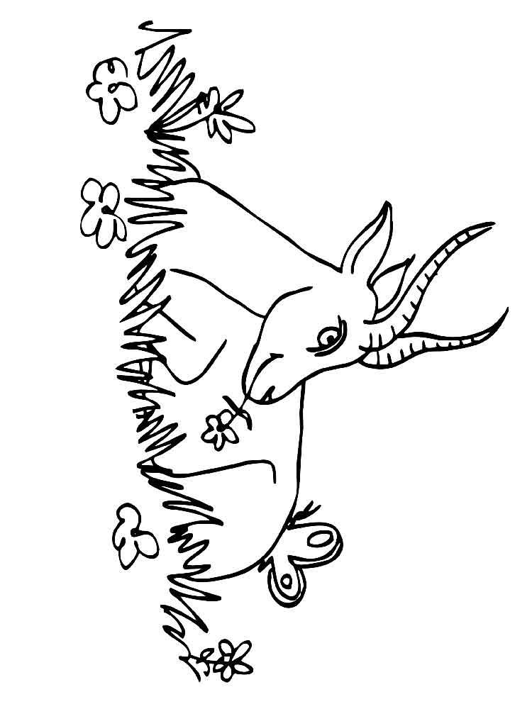 raskraski-antilopa-1