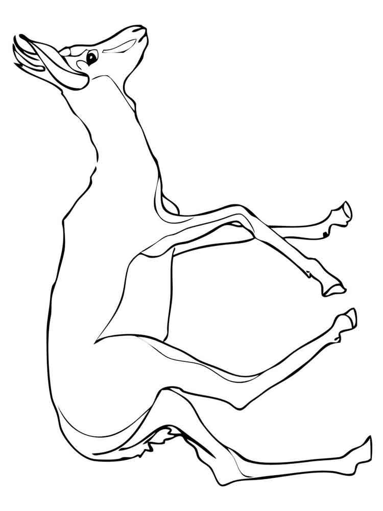 raskraski-antilopa-10
