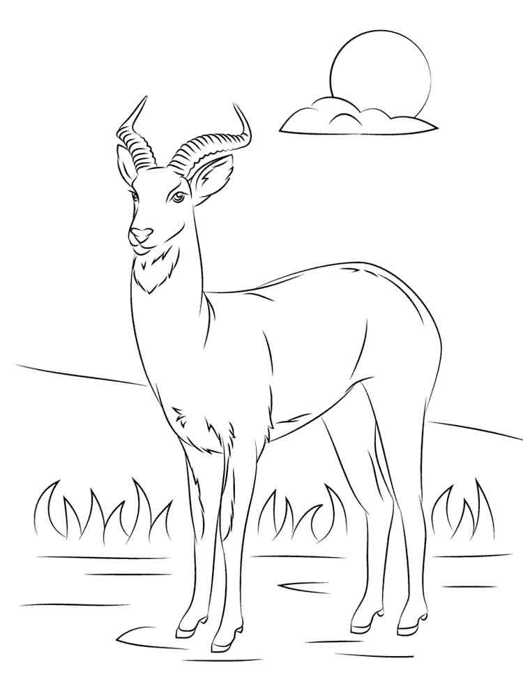raskraski-antilopa-11