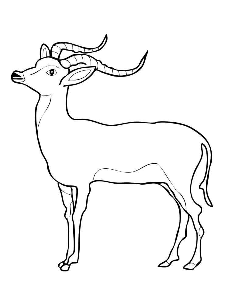 raskraski-antilopa-12