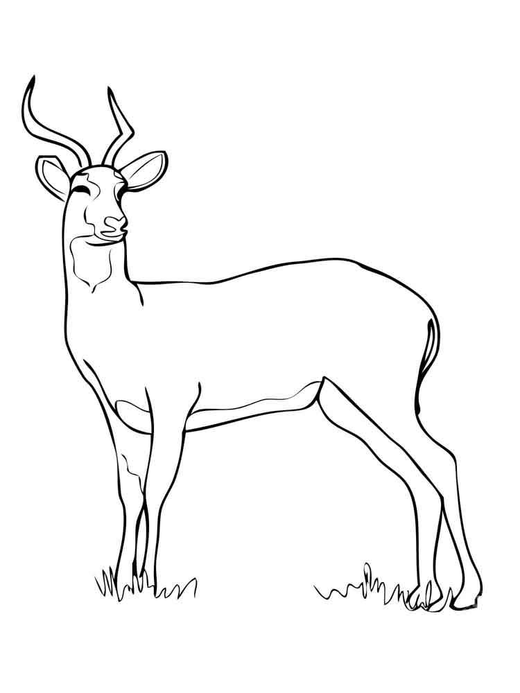 raskraski-antilopa-15