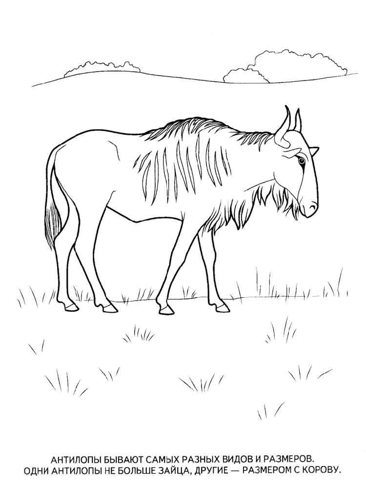 raskraski-antilopa-2