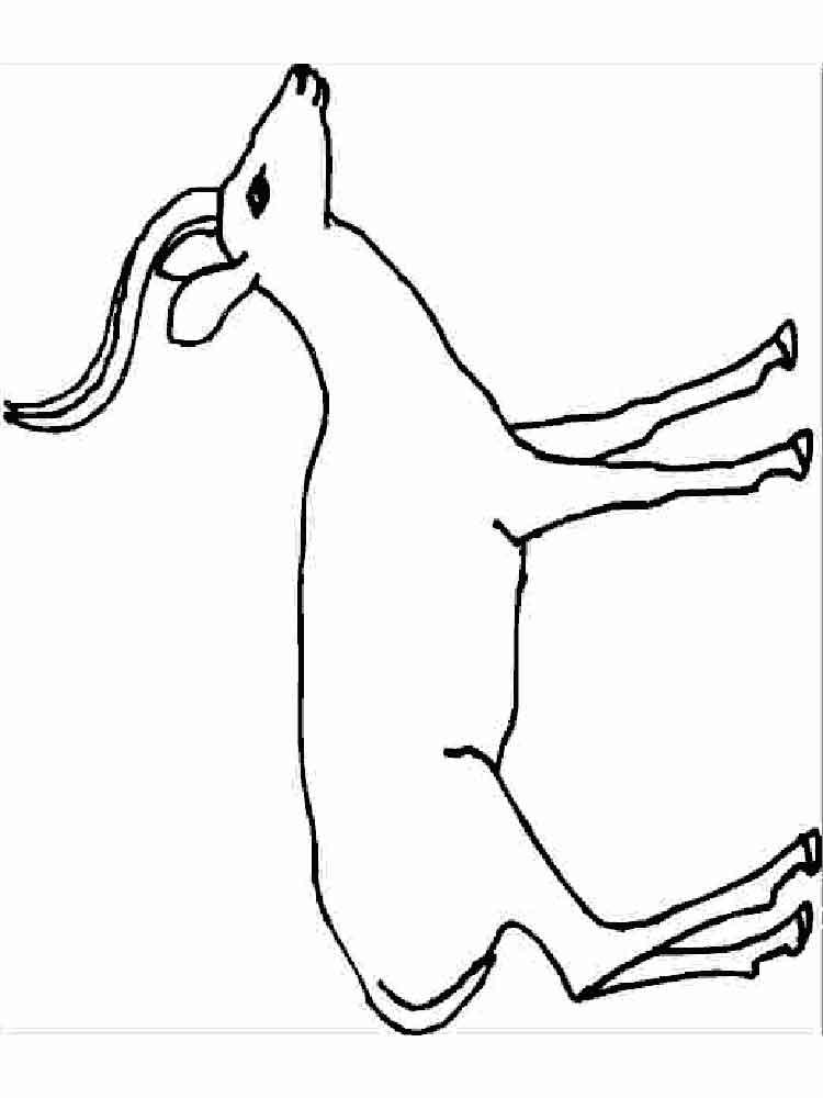 raskraski-antilopa-3