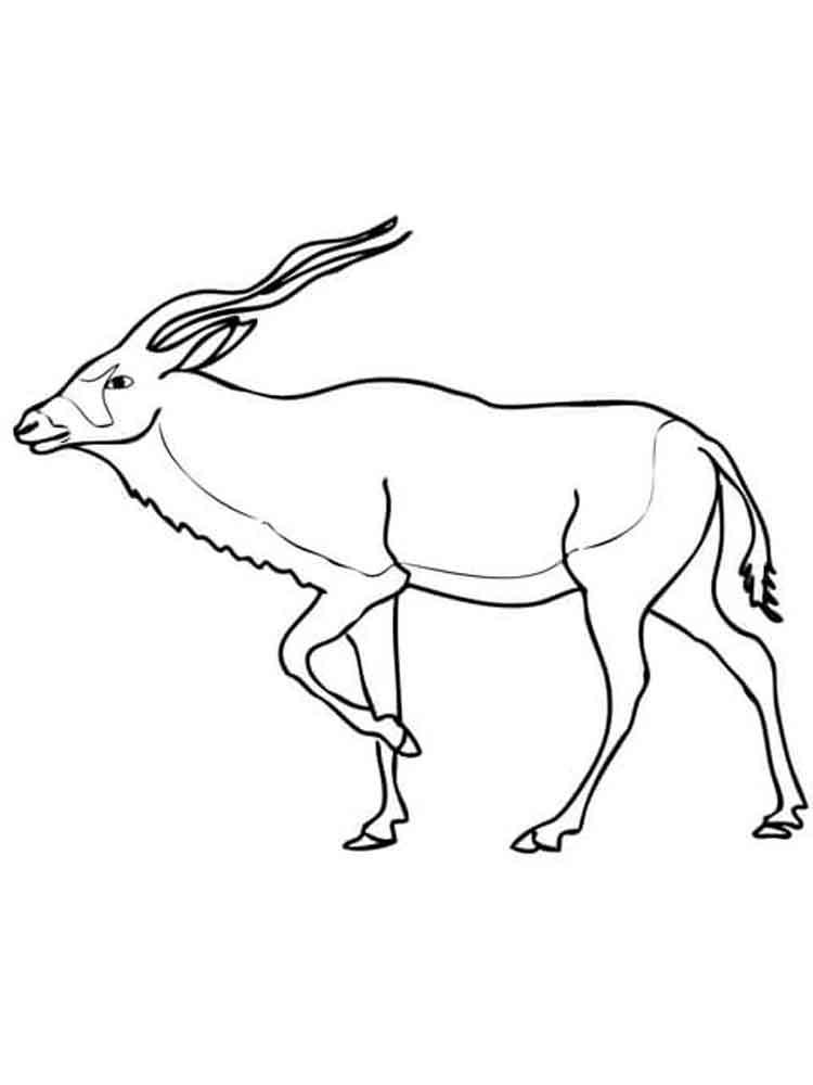 raskraski-antilopa-4