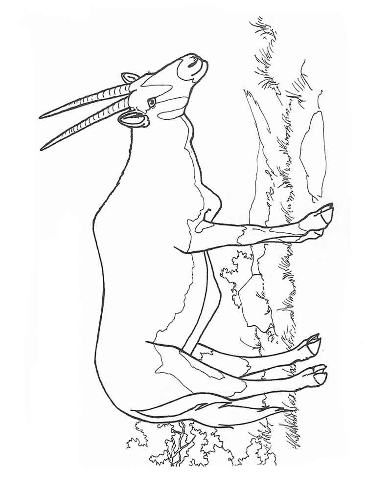raskraski-antilopa-6