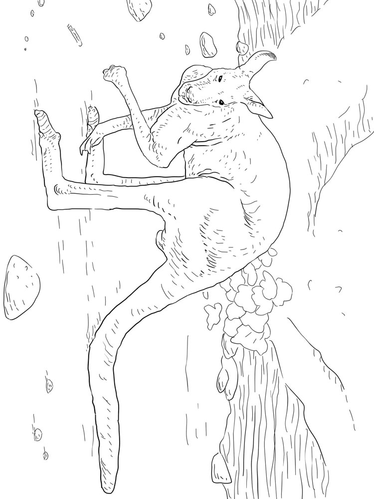 raskraski-kenguru-12