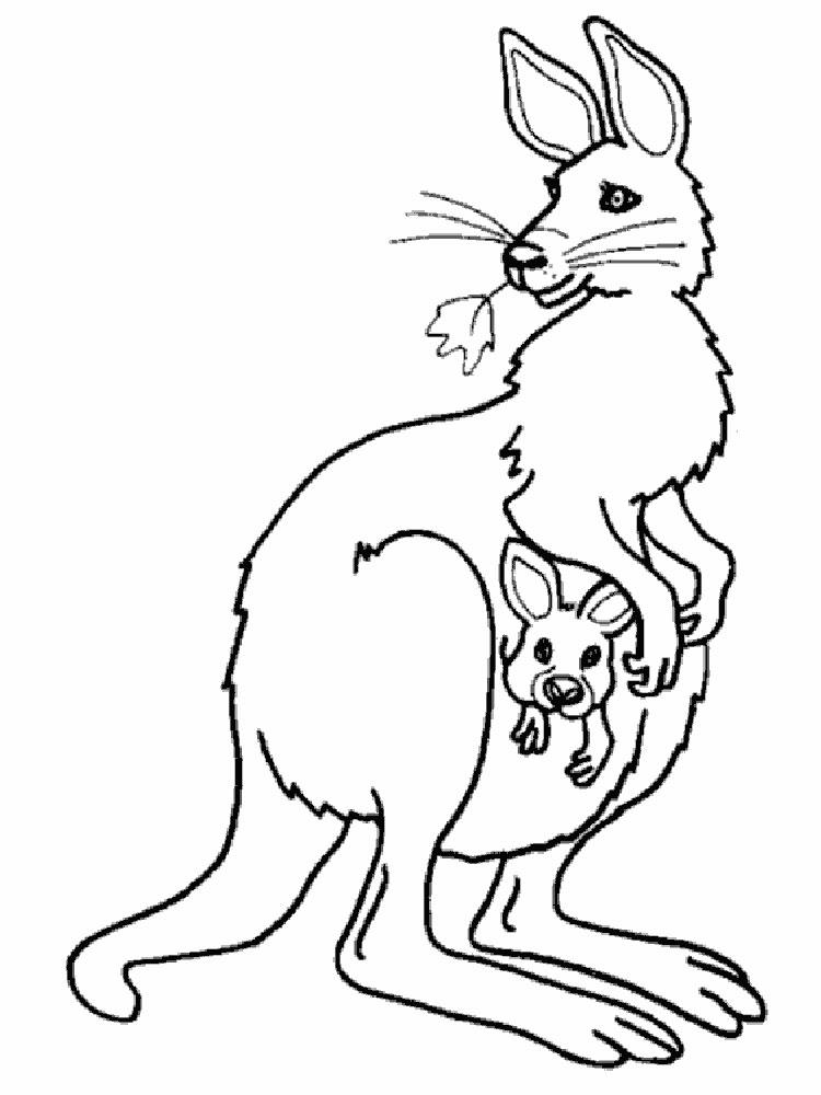 raskraski-kenguru-16