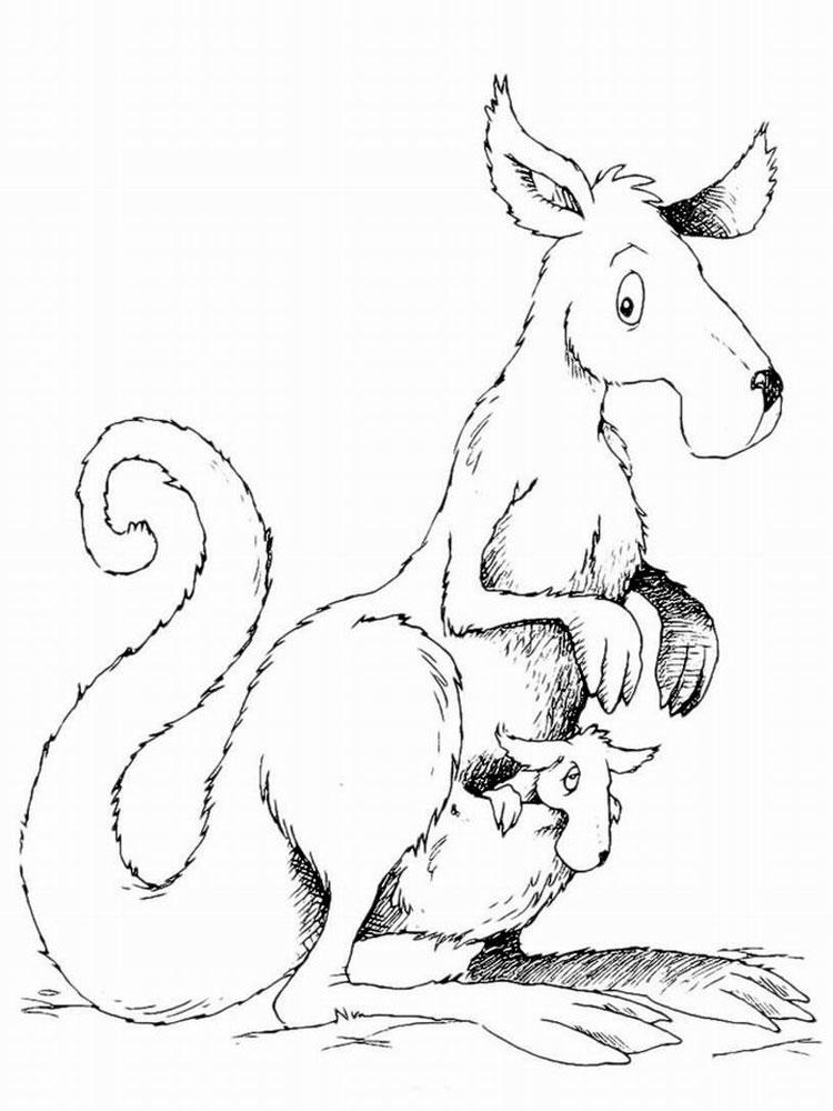 raskraski-kenguru-2