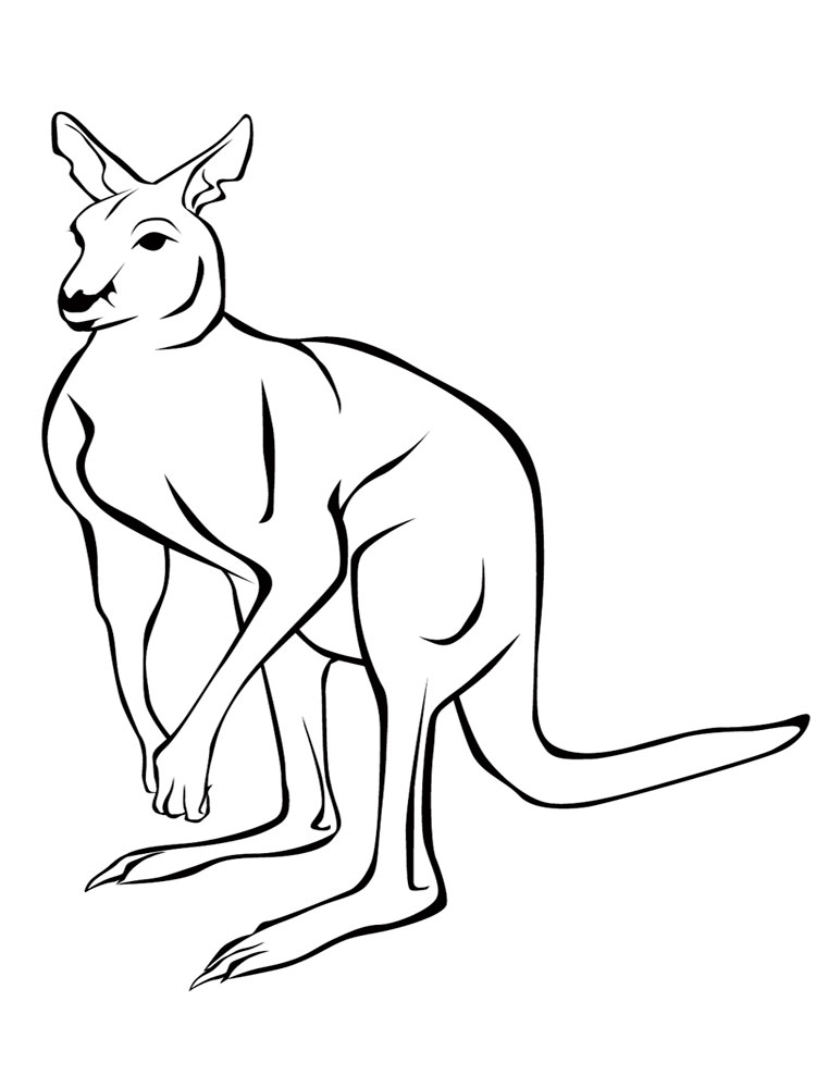 raskraski-kenguru-4