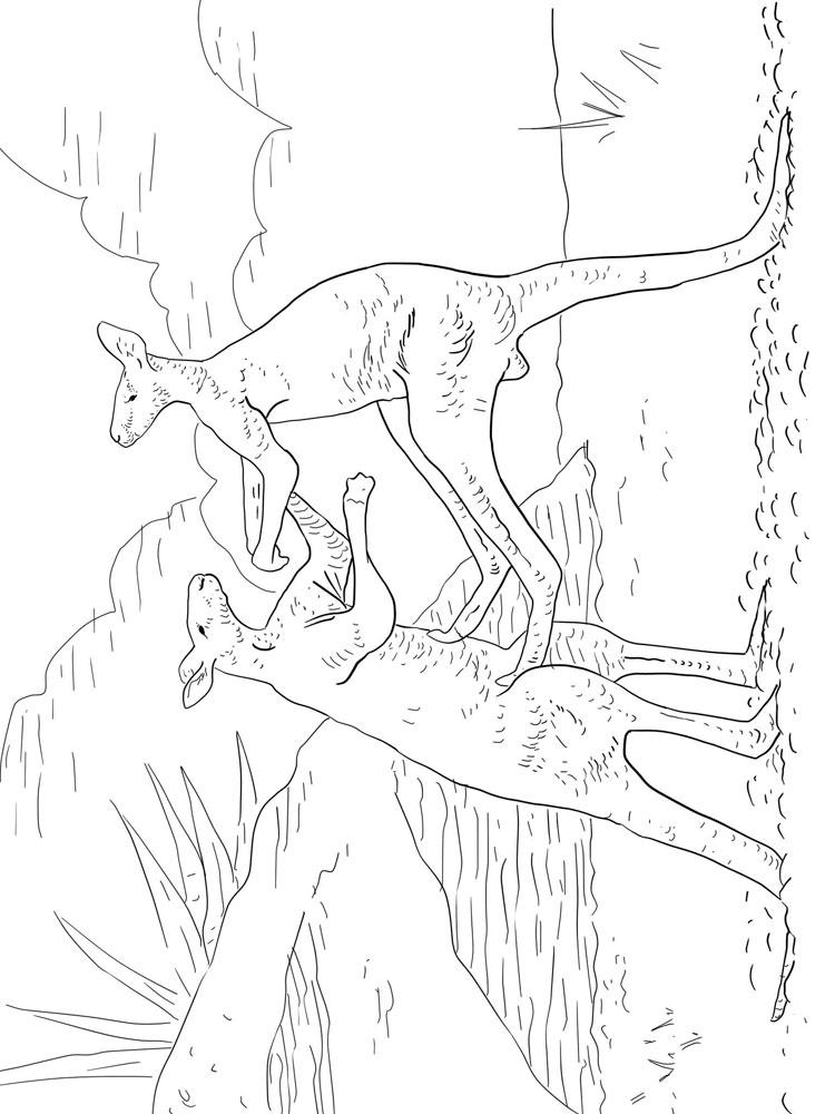 raskraski-kenguru-6