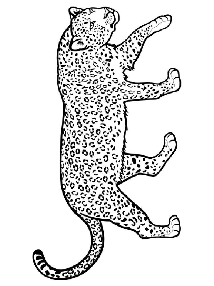 raskraski-leopard-10