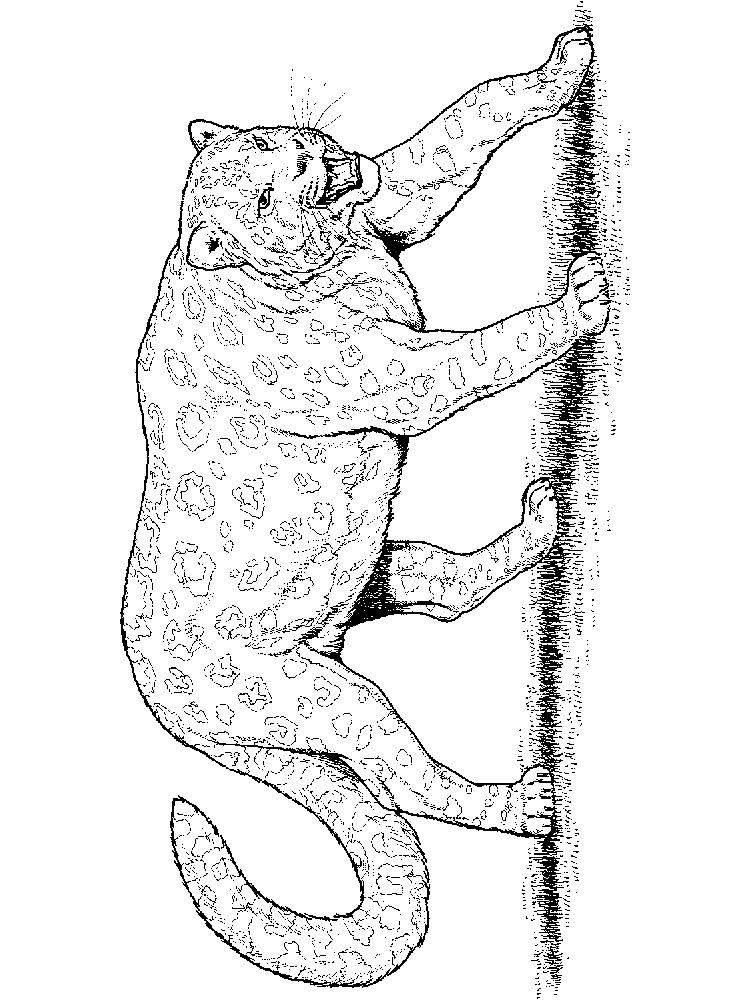 raskraski-leopard-12