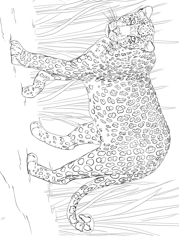 raskraski-leopard-2