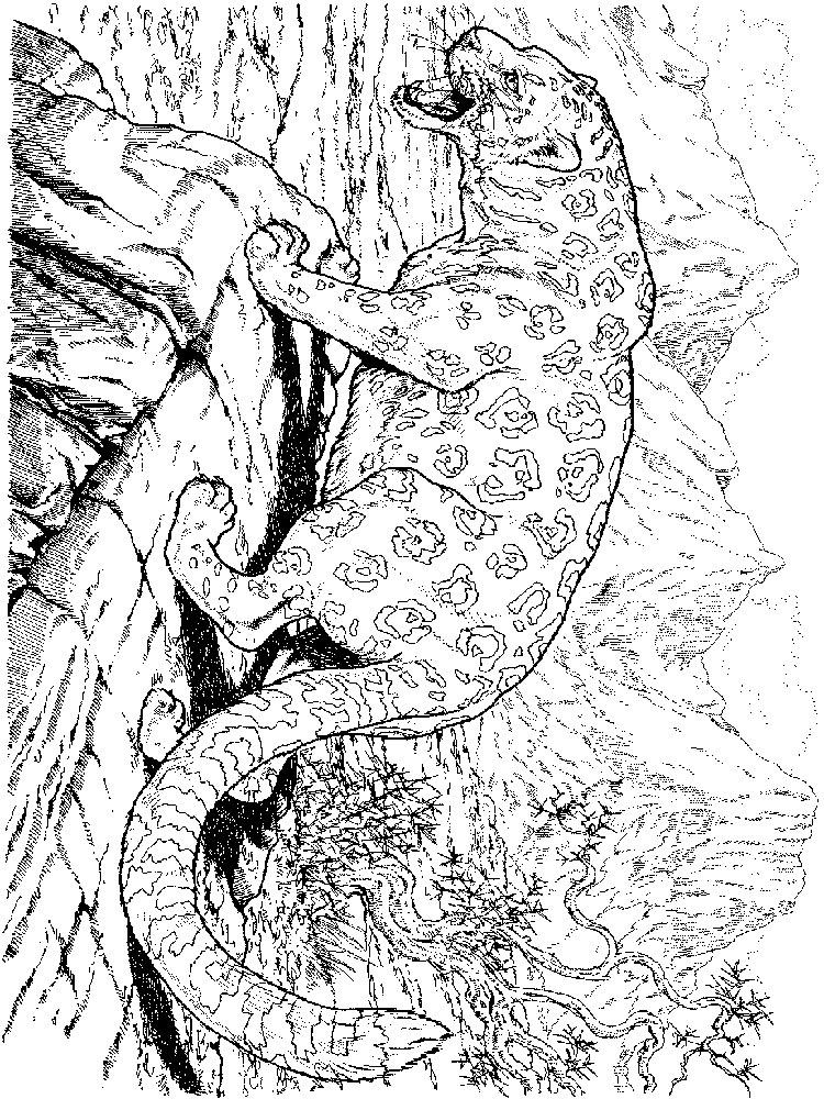 raskraski-leopard-3