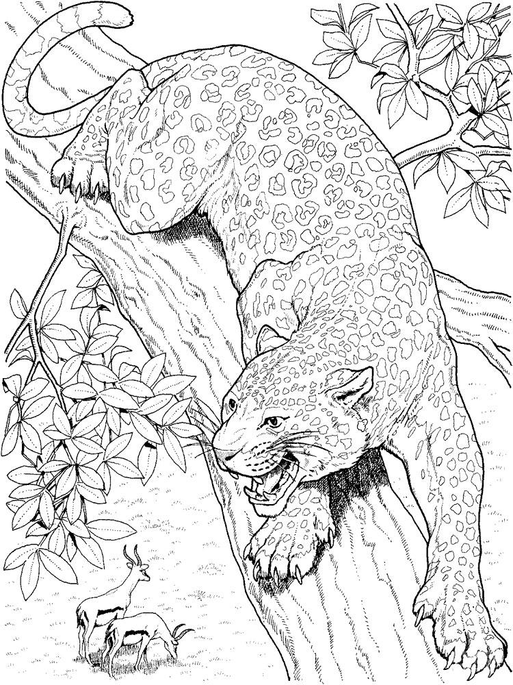 слой раскраска гепарда распечатать антистресс или