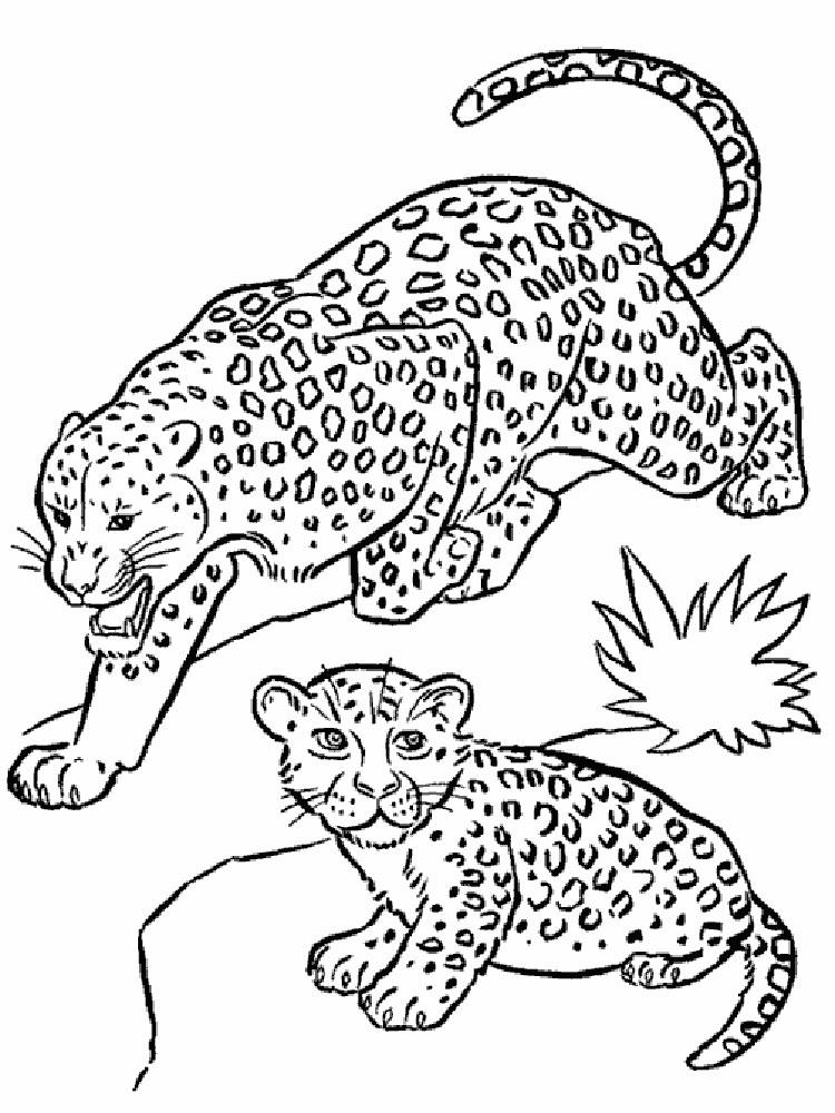 raskraski-leopard-6