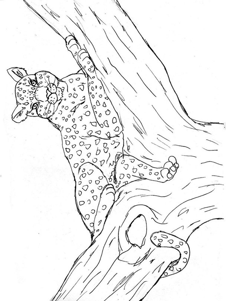 raskraski-leopard-7