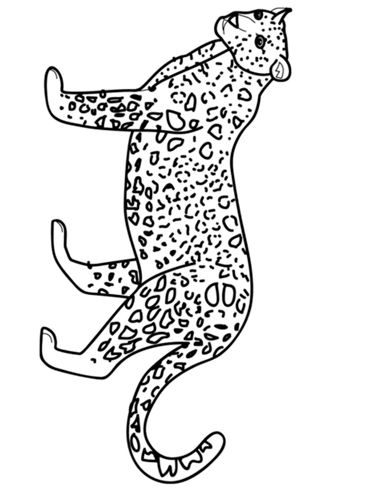 raskraski-leopard-8