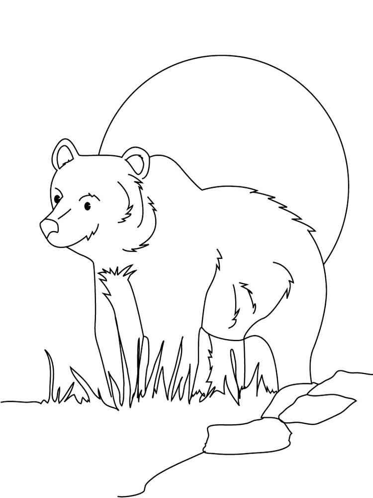 Медведь картинки раскраски для детей, рисунки