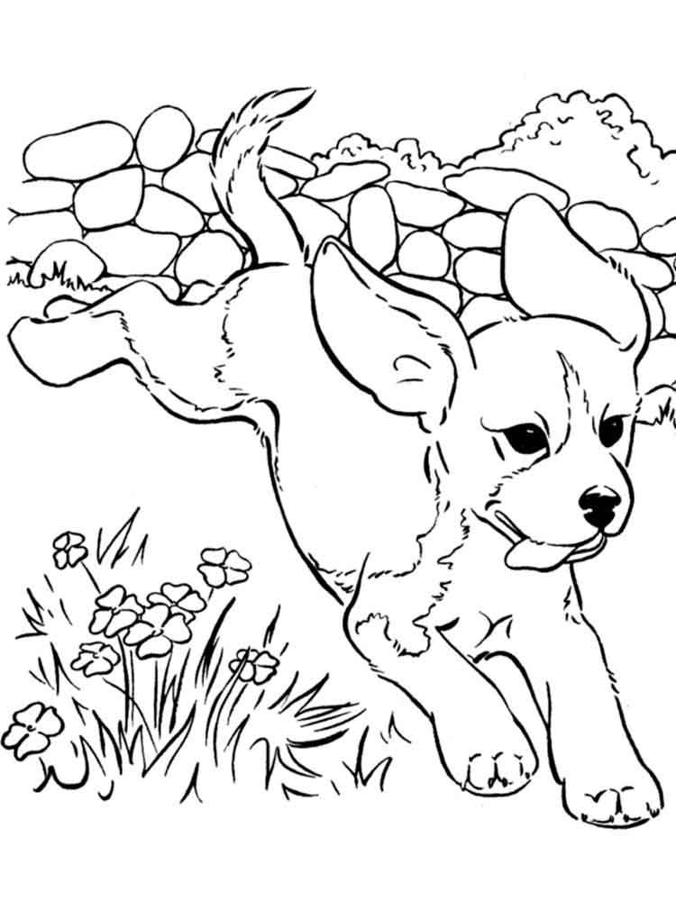 раскраски щенки скачать или распечатать раскраски щенки
