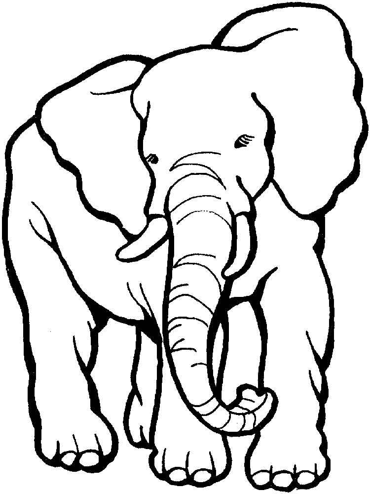 можно раскраска слоники распечатать картинки участники группы