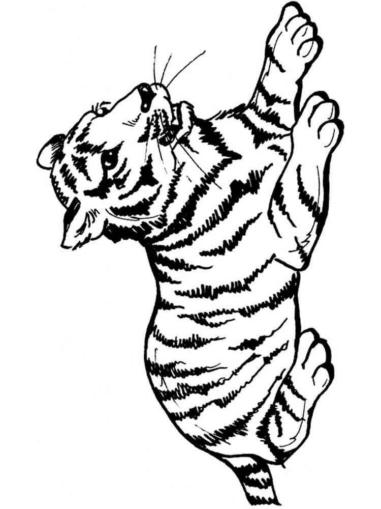 картинка тигренка для раскрашивания