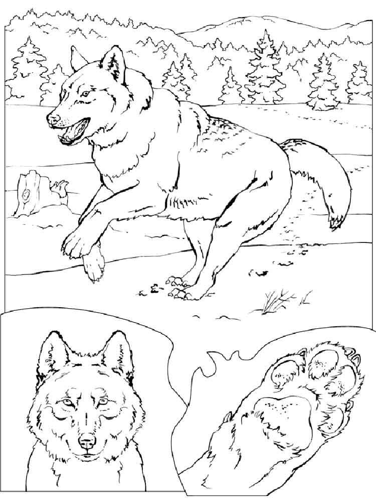 raskraski-volk-1
