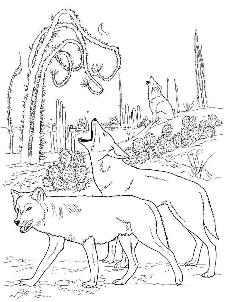 raskraski-volk-13