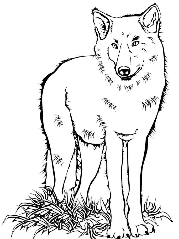 raskraski-volk-15