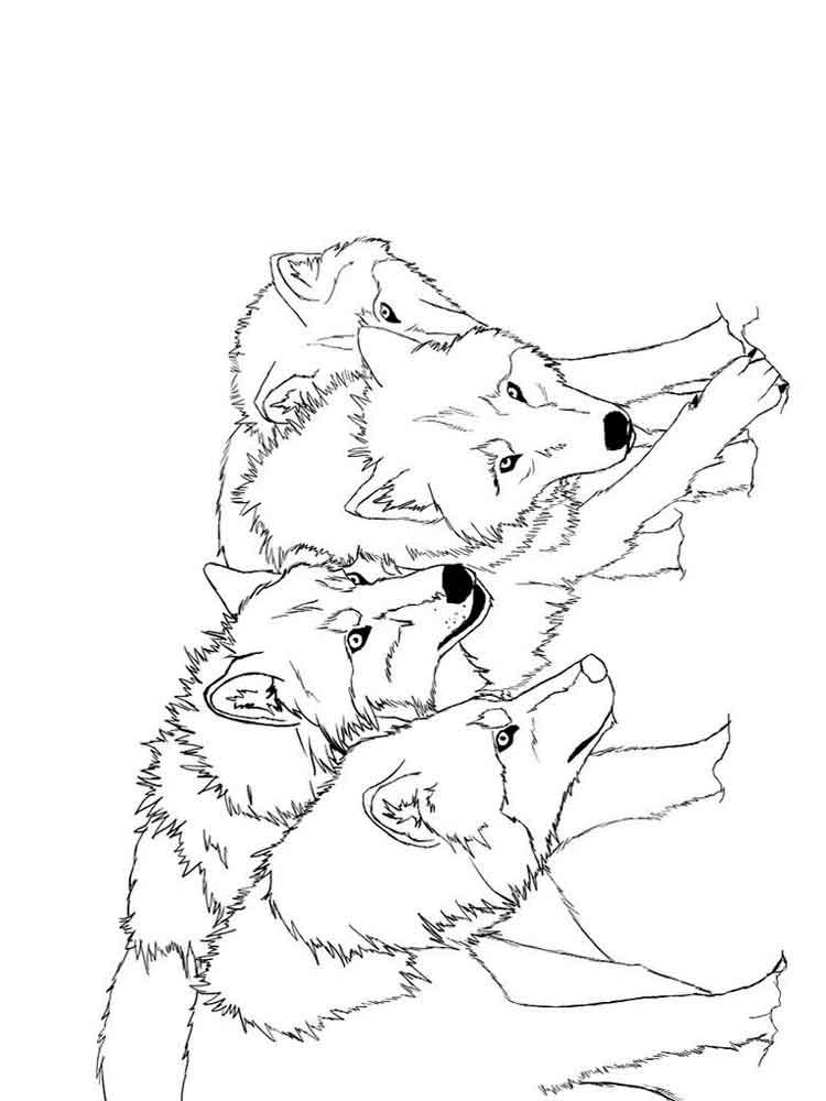 raskraski-volk-16