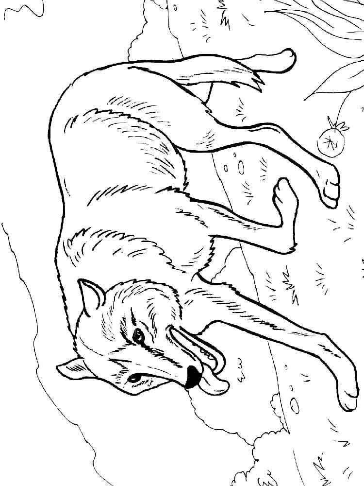 raskraski-volk-18