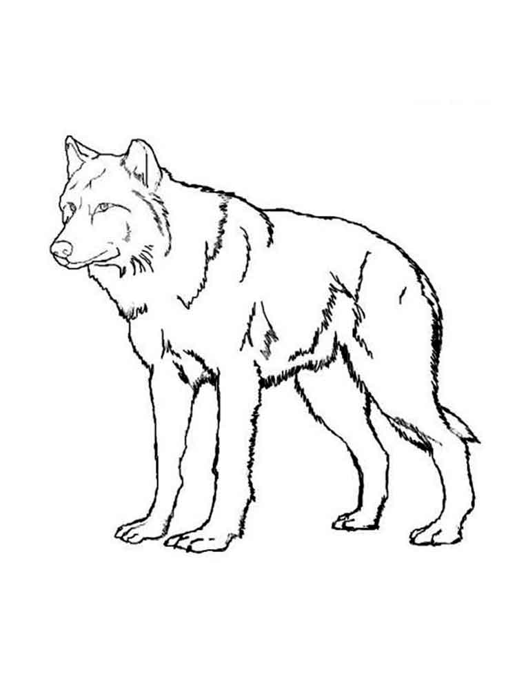 raskraski-volk-2