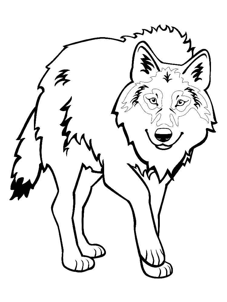 raskraski-volk-20