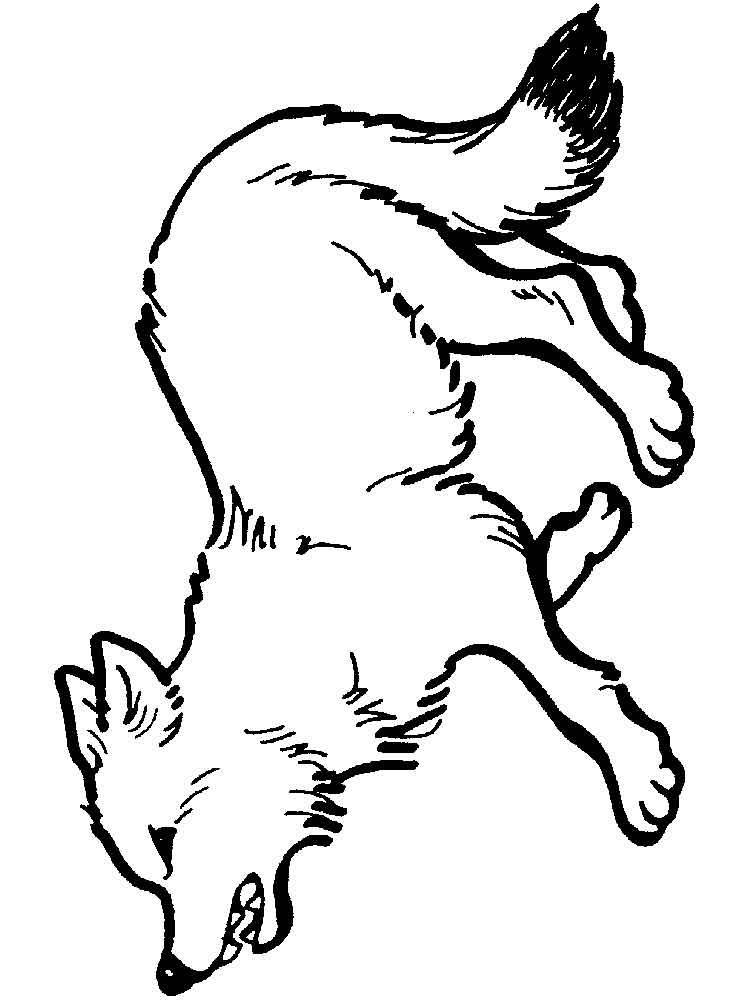raskraski-volk-5