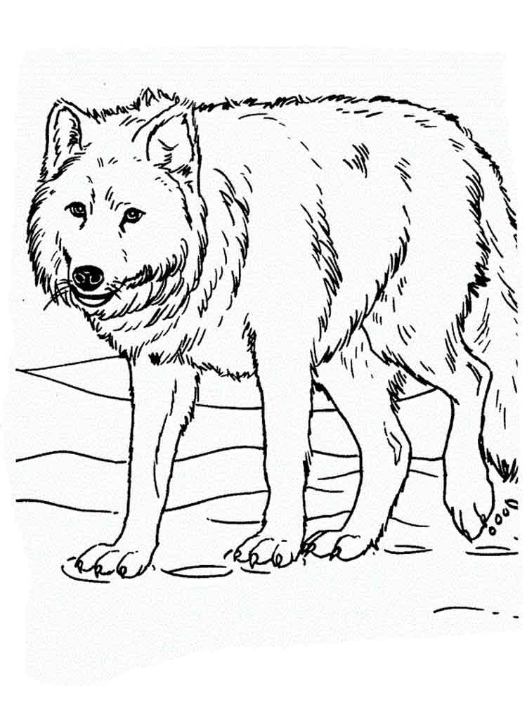 raskraski-volk-9